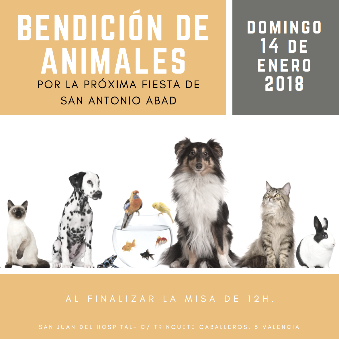 benedicció d'animals